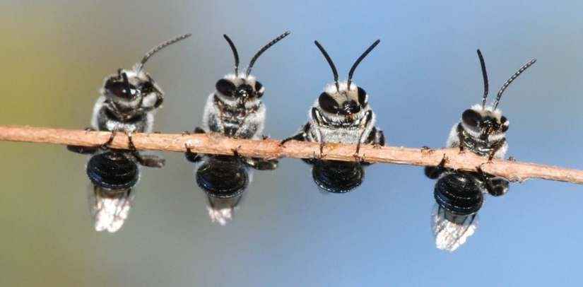 bees on a twig